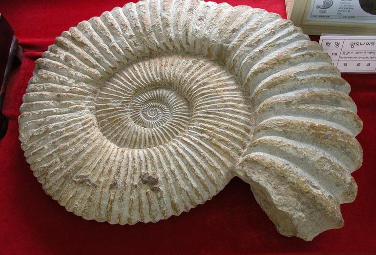 Геологическая экспозиция в музее на острове Удо