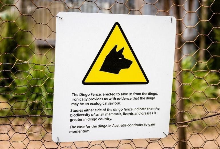 Ограда от собак динго